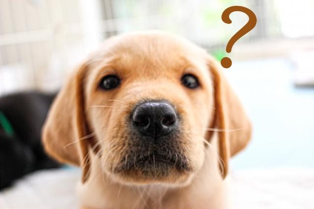 防炎加工犬?